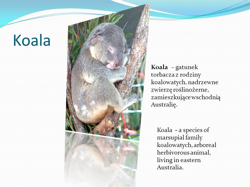 KoalaKoala – gatunek torbacza z rodziny koalowatych, nadrzewne zwierzę roślinożerne, zamieszkujące wschodnią Australię.