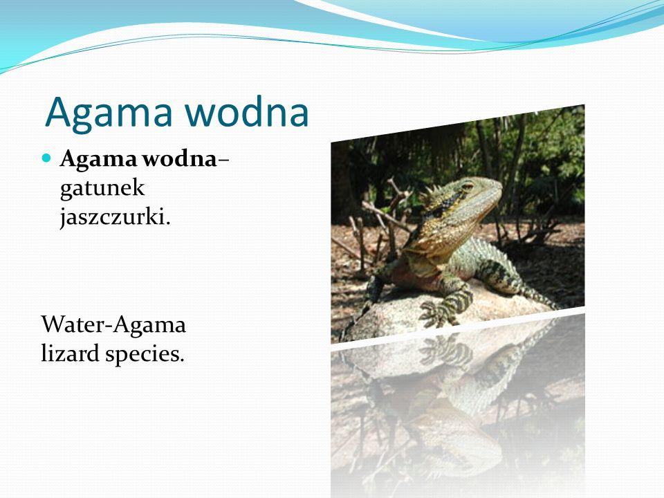 Agama wodna Agama wodna– gatunek jaszczurki.