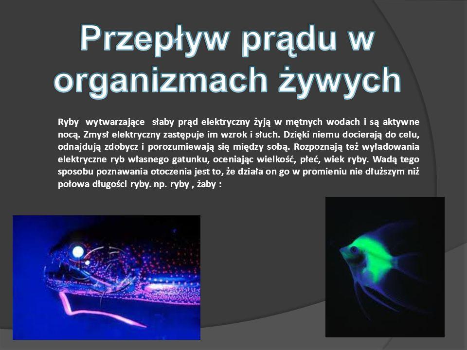 Przepływ prądu w organizmach żywych