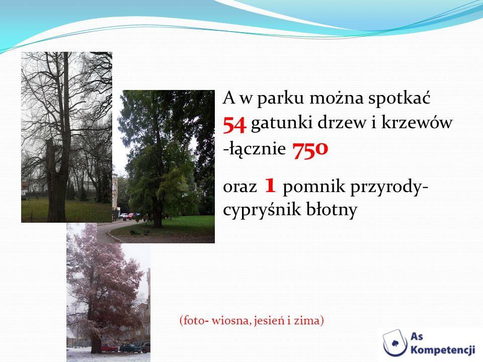 (foto- wiosna, jesień i zima)