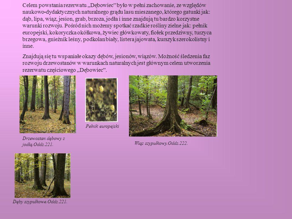 """Celem powstania rezerwatu """"Dębowiec było w pełni zachowanie, ze względów naukowo-dydaktycznych naturalnego grądu lasu mieszanego, którego gatunki jak: dąb, lipa, wiąz, jesion, grab, brzoza, jodła i inne znajdują tu bardzo korzystne warunki rozwoju. Pośród nich możemy spotkać rzadkie rośliny zielne jak: pełnik europejski, kokoryczka okółkowa, żywiec główkowaty, fiołek przedziwny, turzyca brzegowa, gnieźnik leśny, podkolan biały, listera jajowata, kurszyk szerokolistny i inne."""