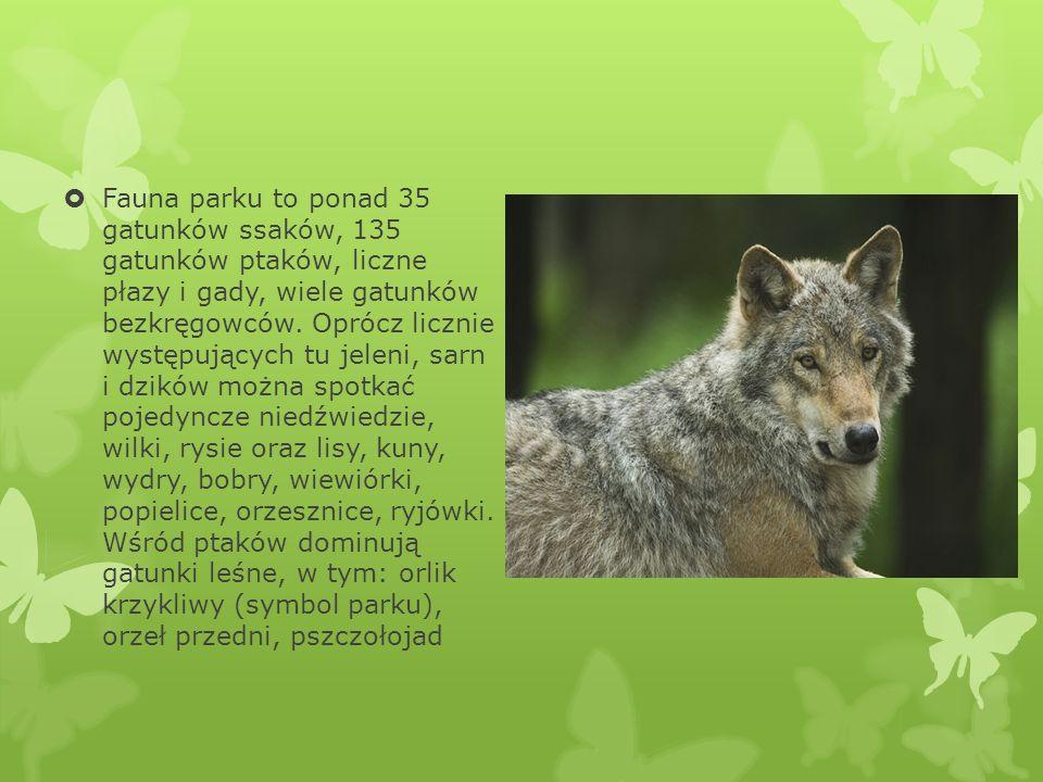Fauna parku to ponad 35 gatunków ssaków, 135 gatunków ptaków, liczne płazy i gady, wiele gatunków bezkręgowców.