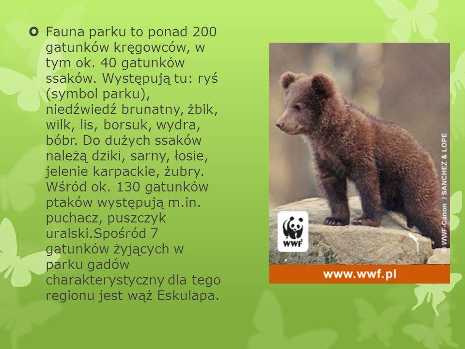 Fauna parku to ponad 200 gatunków kręgowców, w tym ok