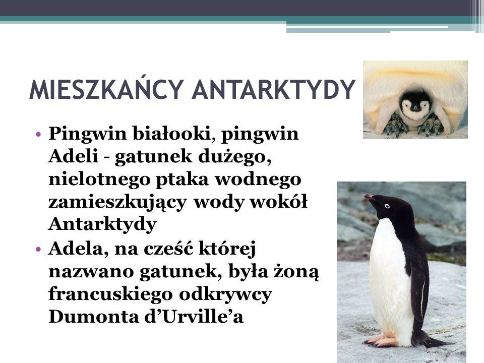 MIESZKAŃCY ANTARKTYDY