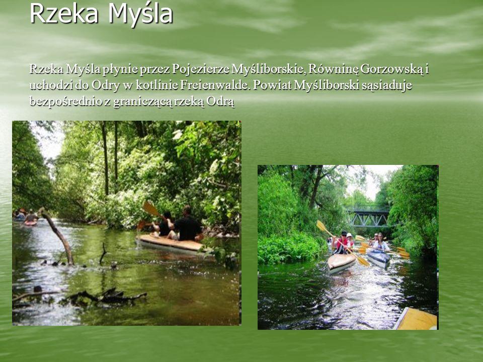 Rzeka Myśla Rzeka Myśla płynie przez Pojezierze Myśliborskie, Równinę Gorzowską i uchodzi do Odry w kotlinie Freienwalde.