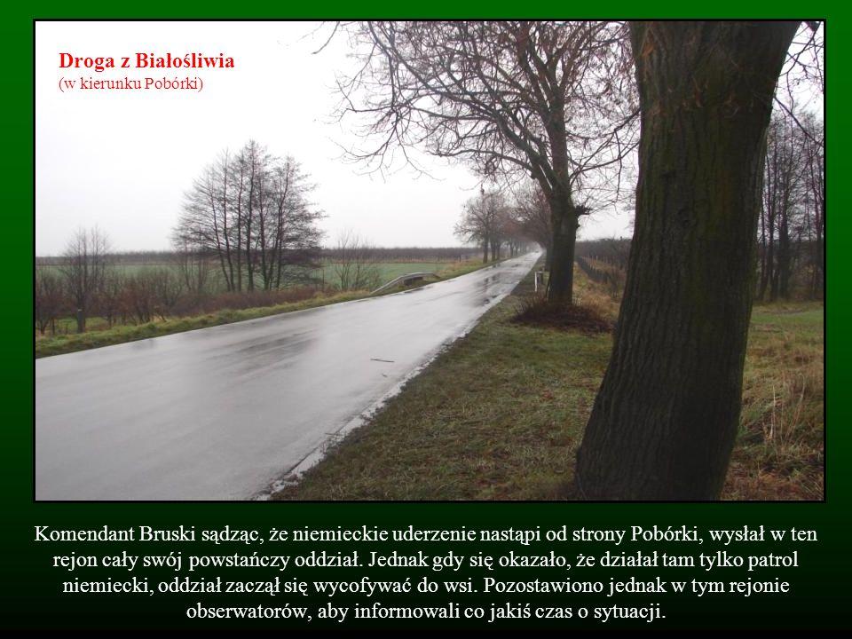 Droga z Białośliwia (w kierunku Pobórki)