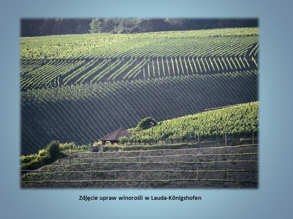 Zdjęcie upraw winorośli w Lauda-Königshofen