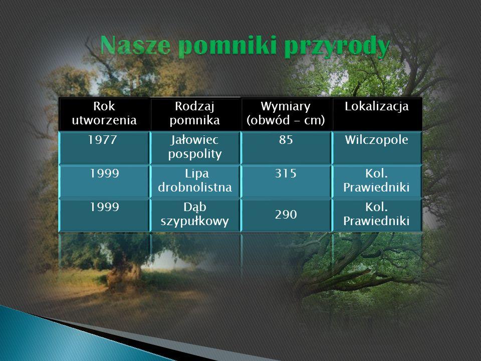 Nasze pomniki przyrody