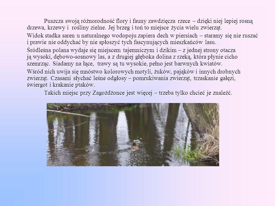 Puszcza swoją różnorodność flory i fauny zawdzięcza rzece – dzięki niej lepiej rosną drzewa, krzewy i rośliny zielne. Jej brzeg i toń to miejsce życia wielu zwierząt.