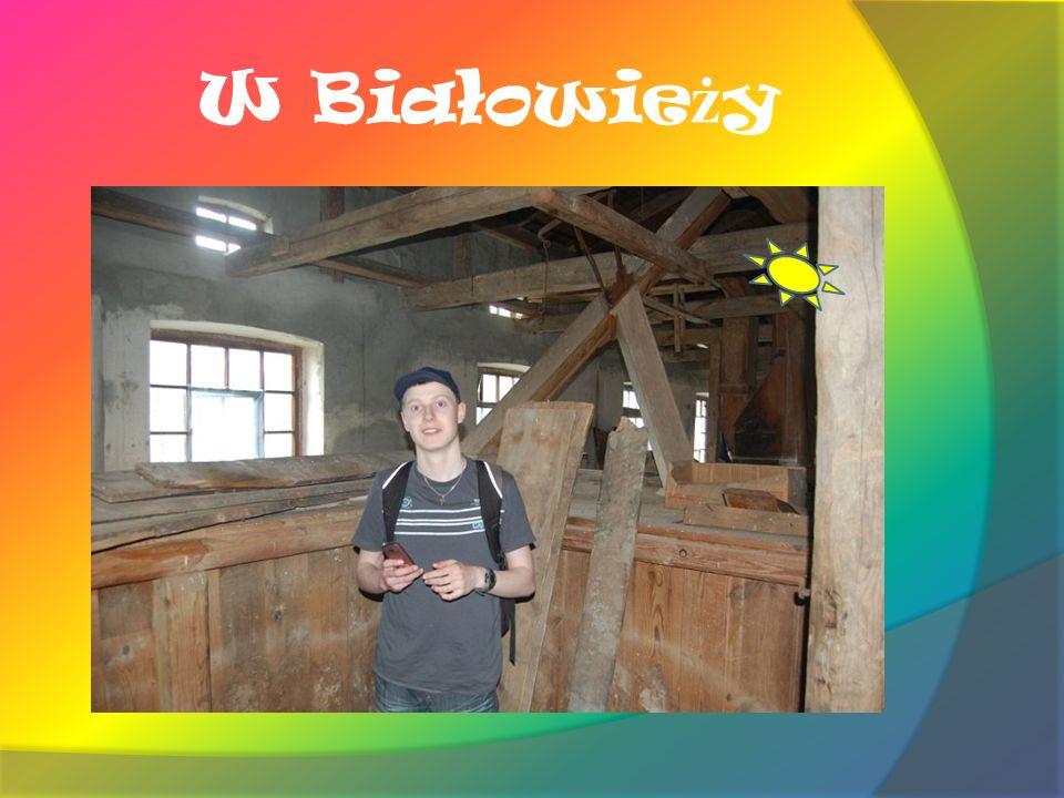 W Białowieży