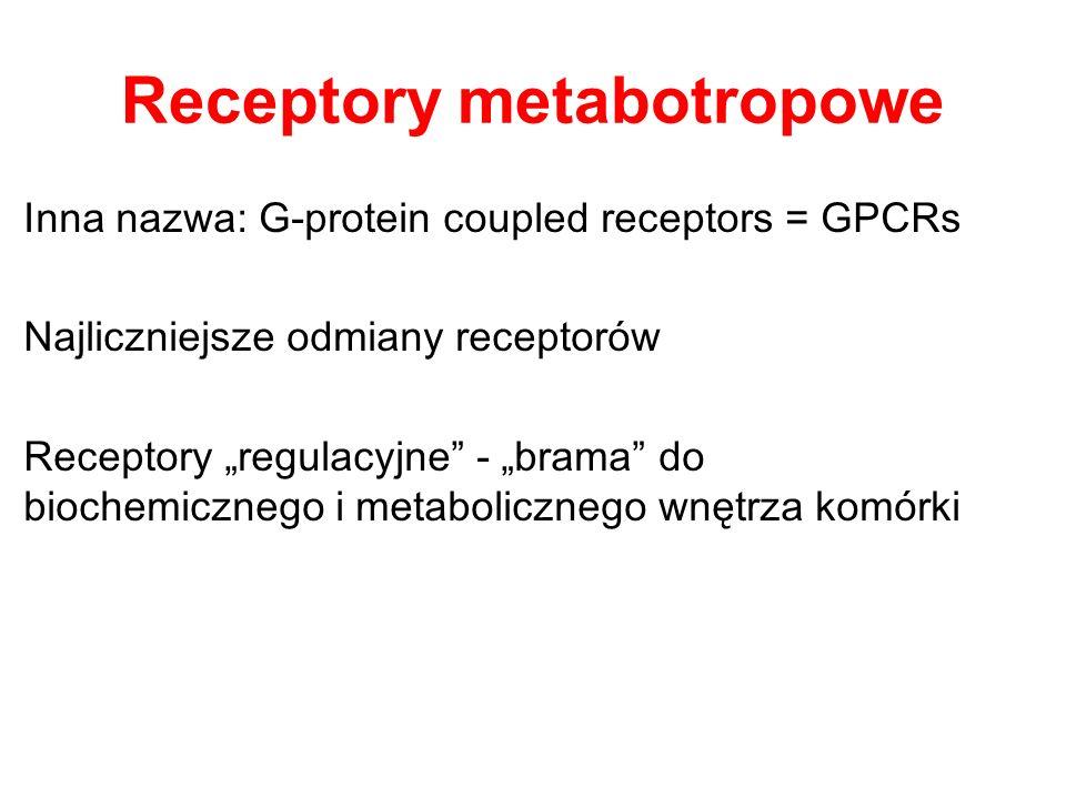Receptory metabotropowe