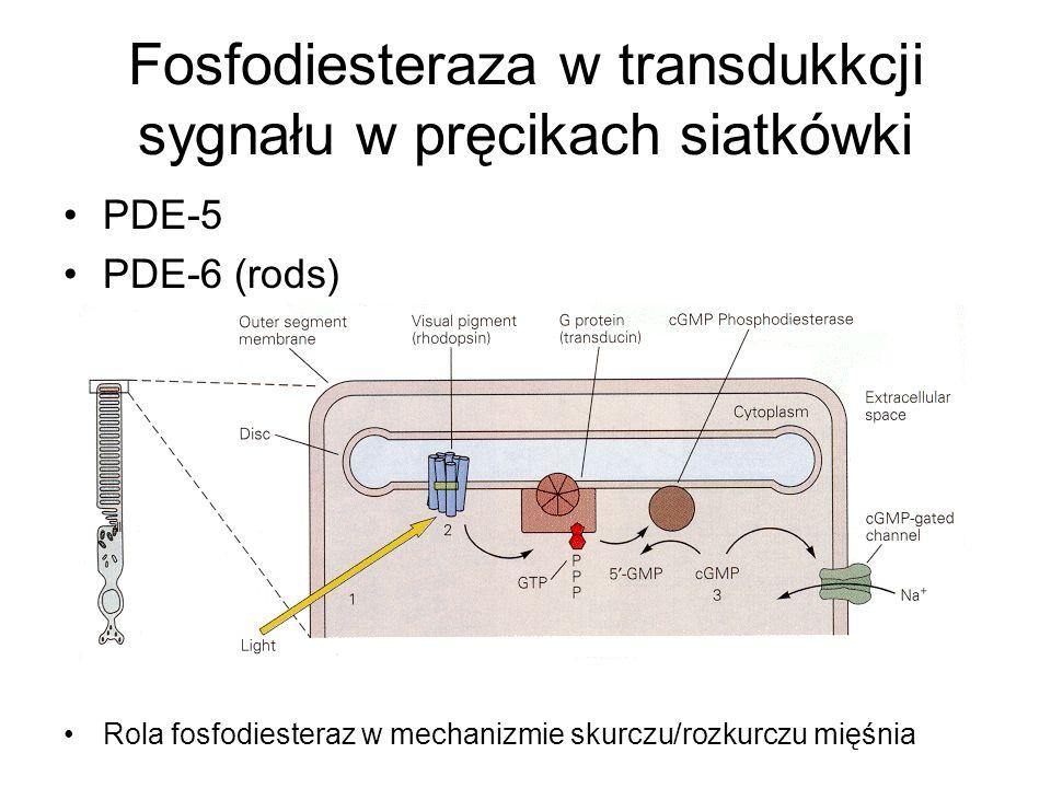Fosfodiesteraza w transdukkcji sygnału w pręcikach siatkówki