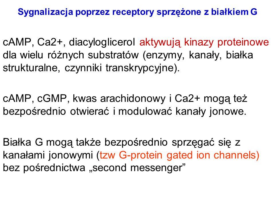 Sygnalizacja poprzez receptory sprzężone z białkiem G