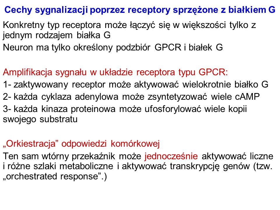 Cechy sygnalizacji poprzez receptory sprzężone z białkiem G