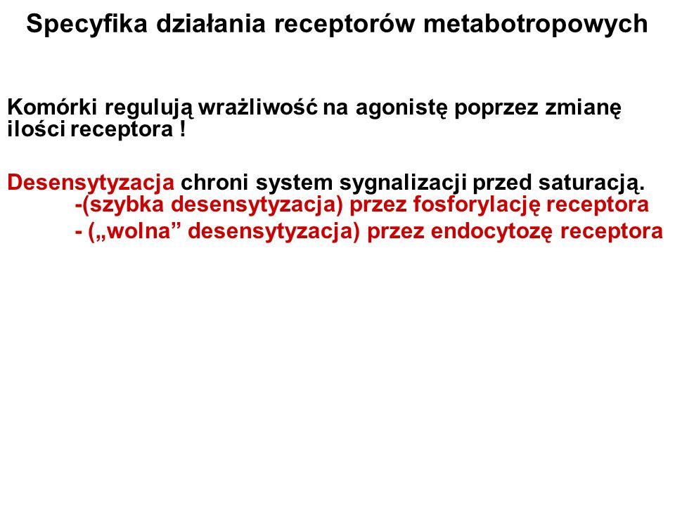 Specyfika działania receptorów metabotropowych
