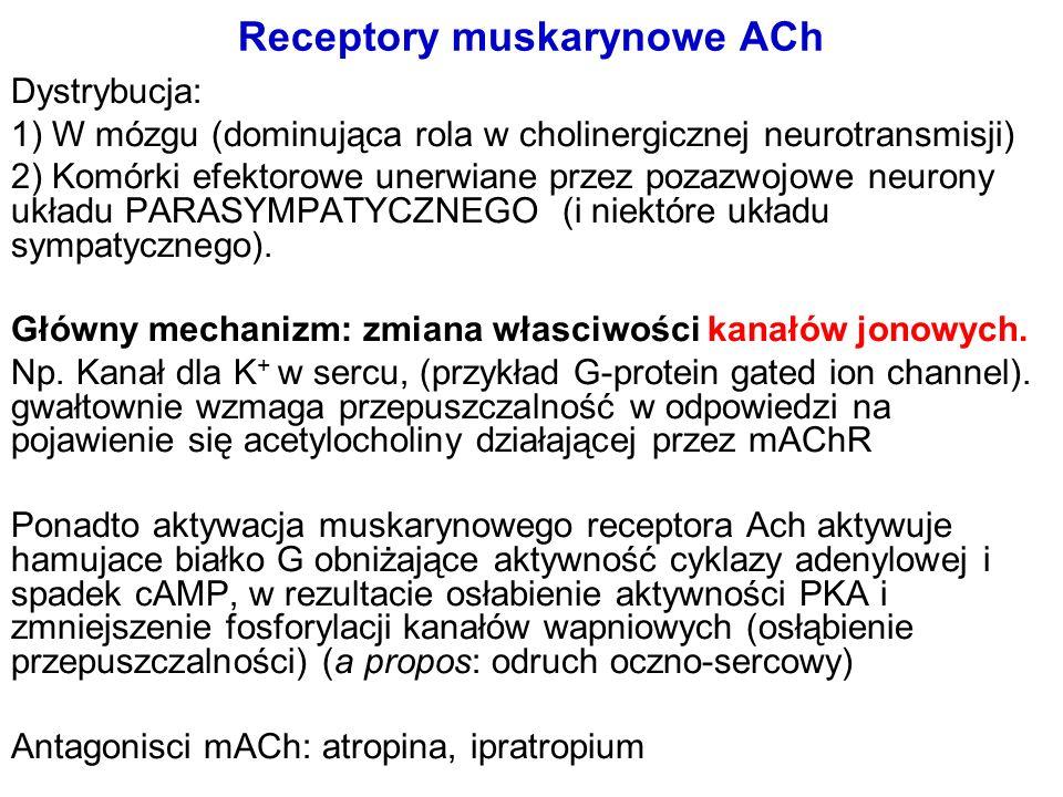Receptory muskarynowe ACh