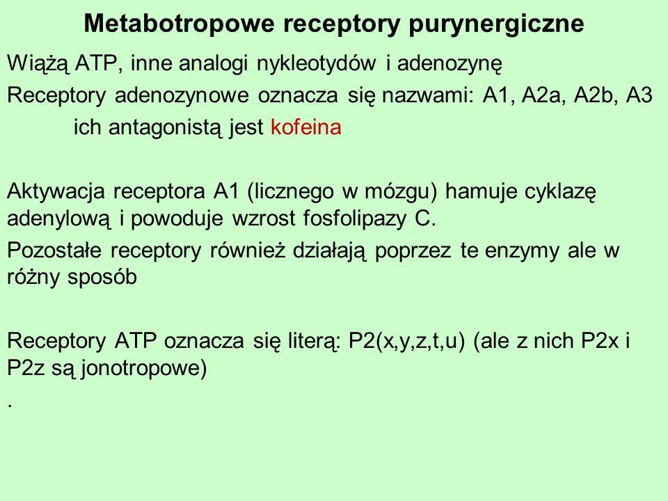 Metabotropowe receptory purynergiczne