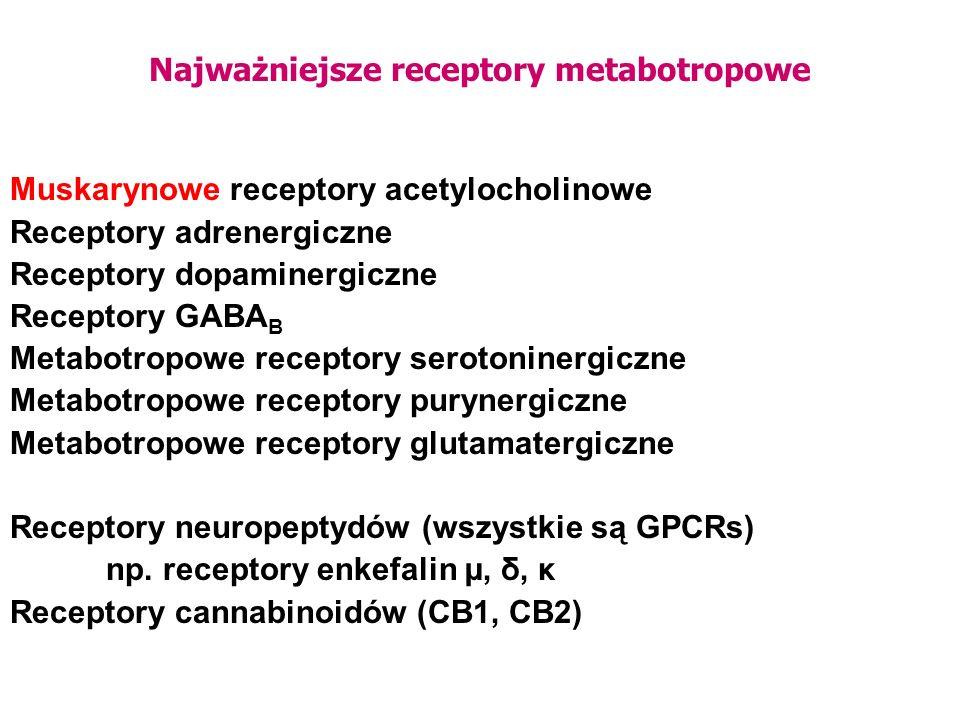 Najważniejsze receptory metabotropowe