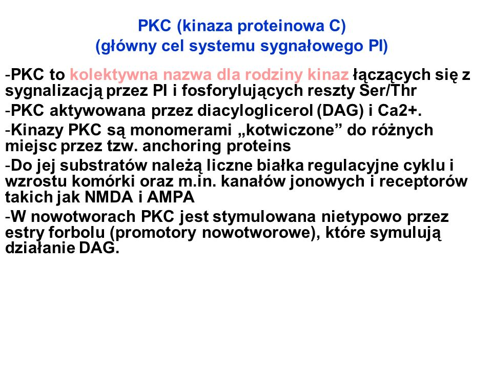 PKC (kinaza proteinowa C) (główny cel systemu sygnałowego PI)