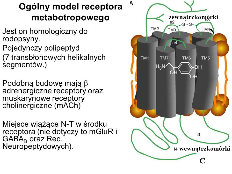 Ogólny model receptora metabotropowego