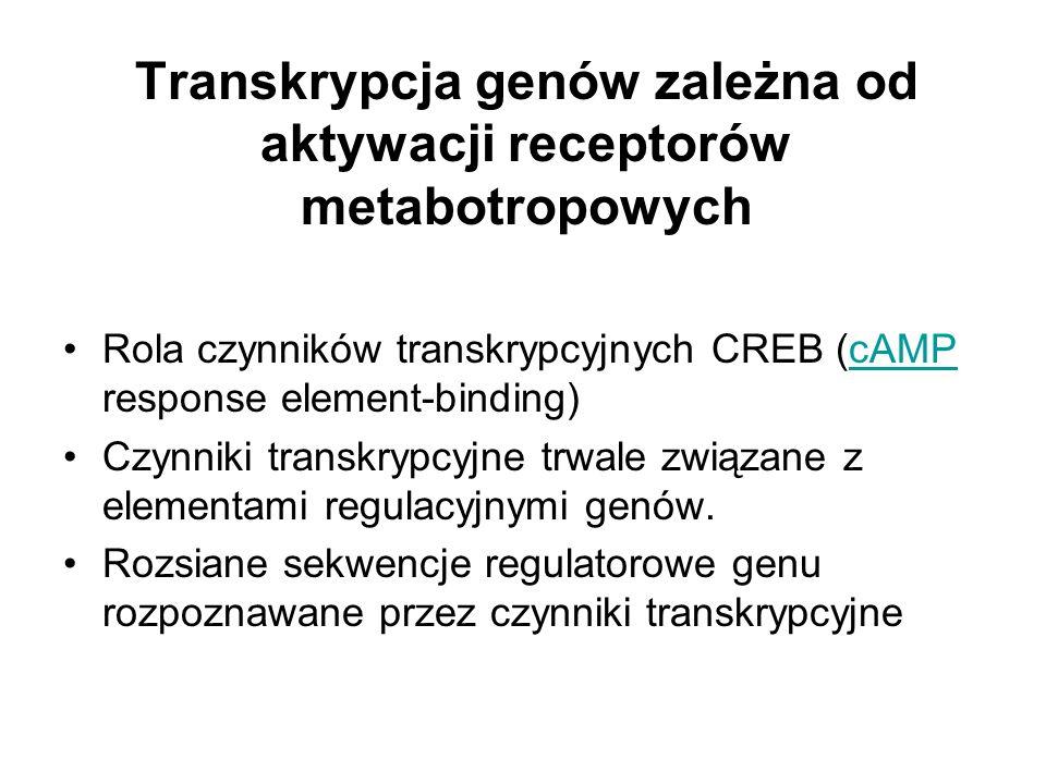 Transkrypcja genów zależna od aktywacji receptorów metabotropowych