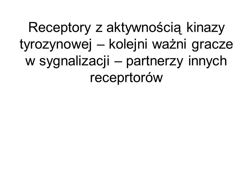 Receptory z aktywnością kinazy tyrozynowej – kolejni ważni gracze w sygnalizacji – partnerzy innych receprtorów
