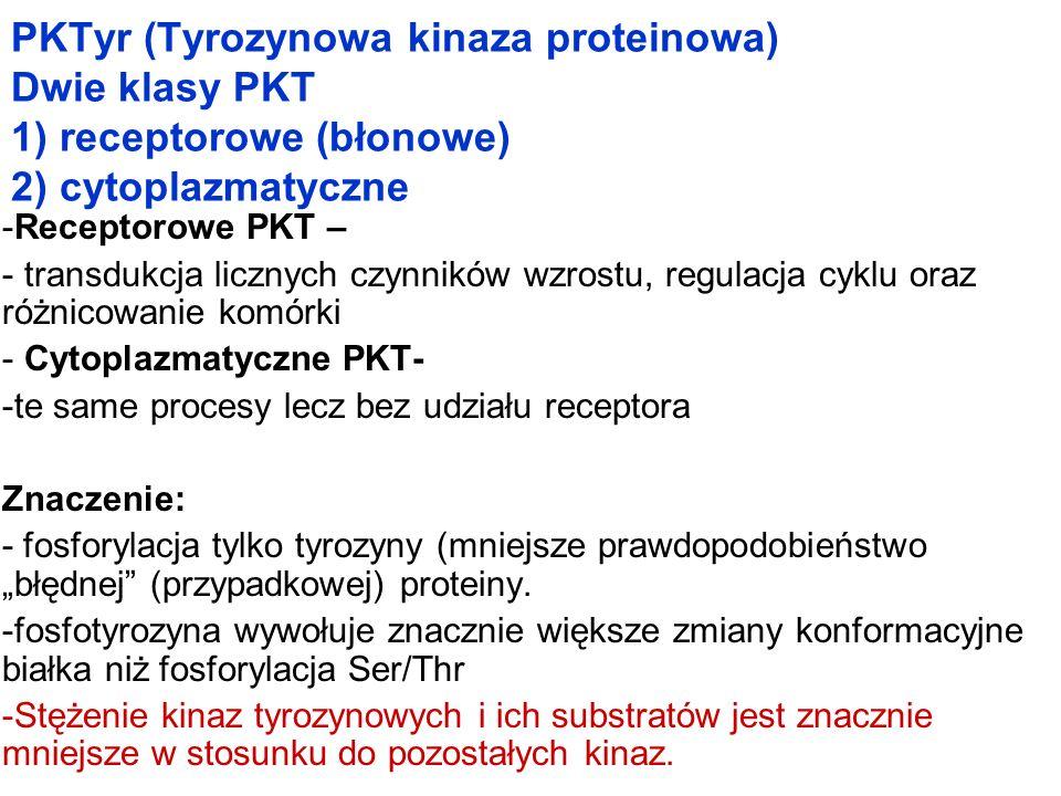 PKTyr (Tyrozynowa kinaza proteinowa) Dwie klasy PKT 1) receptorowe (błonowe) 2) cytoplazmatyczne