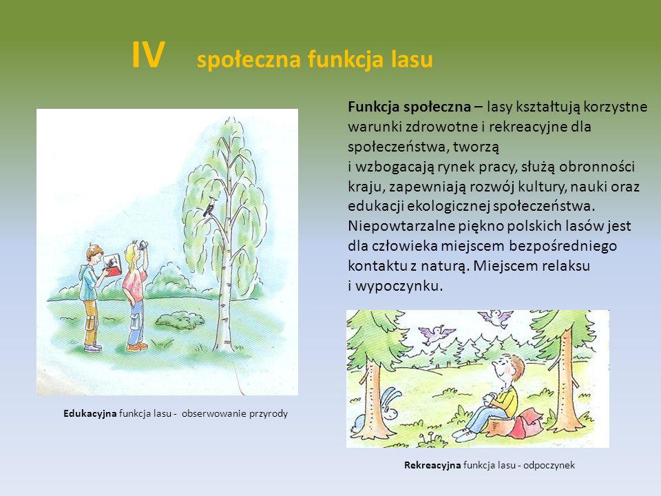 IV społeczna funkcja lasu