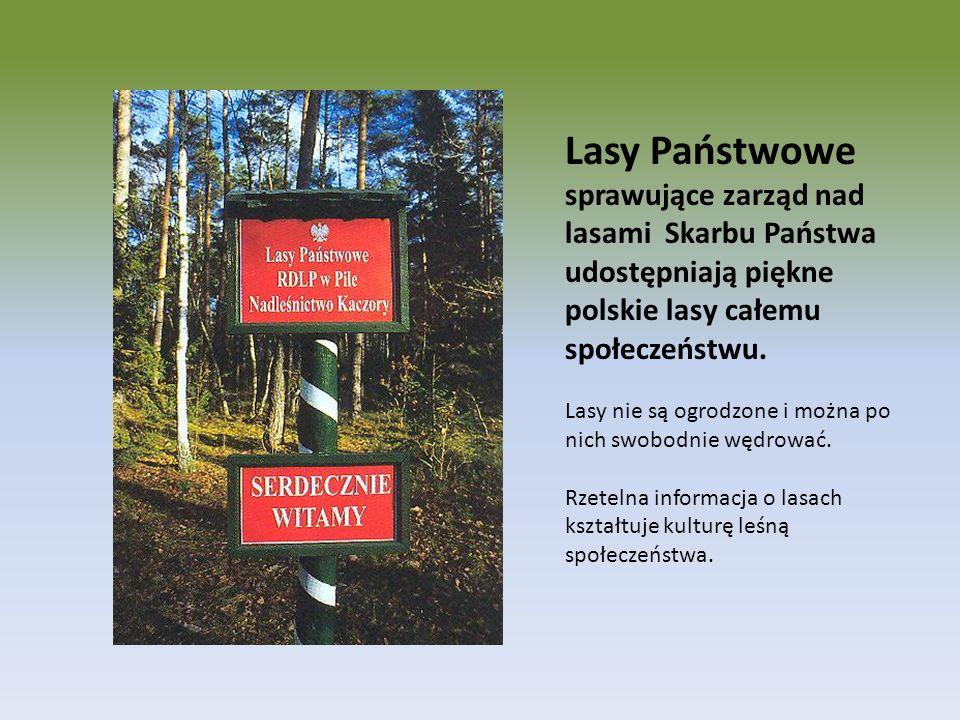 Lasy Państwowe sprawujące zarząd nad lasami Skarbu Państwa udostępniają piękne polskie lasy całemu społeczeństwu.