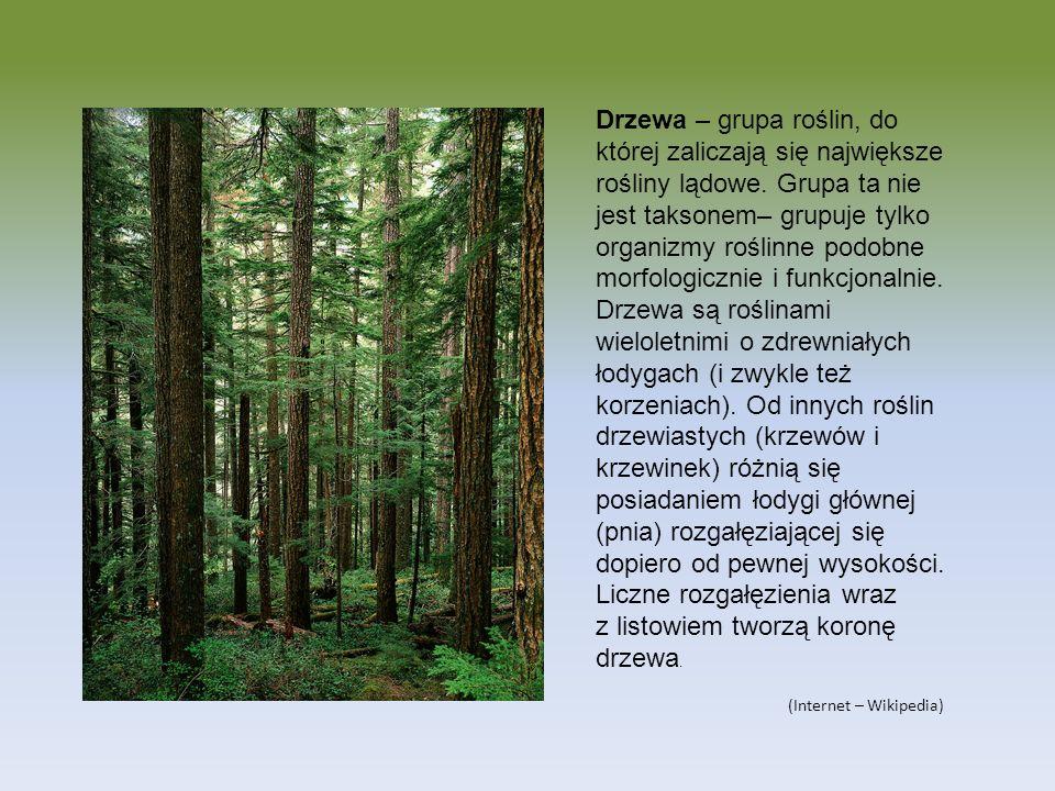 Drzewa – grupa roślin, do której zaliczają się największe rośliny lądowe. Grupa ta nie jest taksonem– grupuje tylko organizmy roślinne podobne morfologicznie i funkcjonalnie. Drzewa są roślinami wieloletnimi o zdrewniałych łodygach (i zwykle też korzeniach). Od innych roślin drzewiastych (krzewów i krzewinek) różnią się posiadaniem łodygi głównej (pnia) rozgałęziającej się dopiero od pewnej wysokości. Liczne rozgałęzienia wraz z listowiem tworzą koronę drzewa.