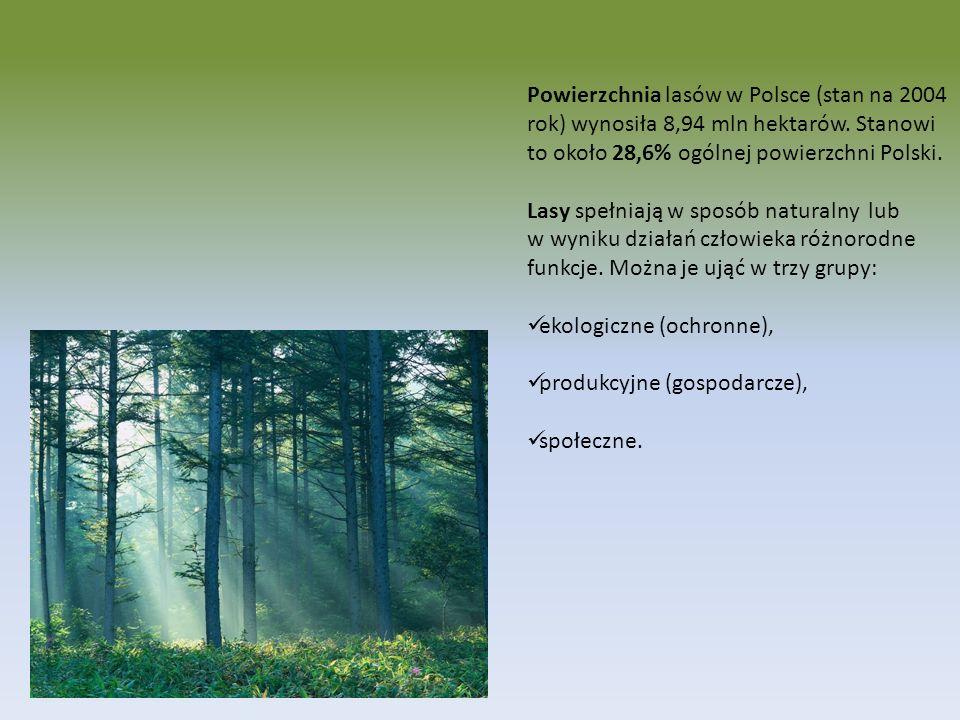 Powierzchnia lasów w Polsce (stan na 2004 rok) wynosiła 8,94 mln hektarów. Stanowi to około 28,6% ogólnej powierzchni Polski.
