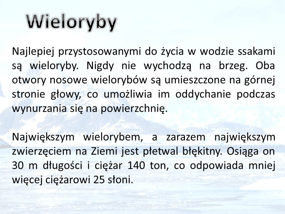 Wieloryby