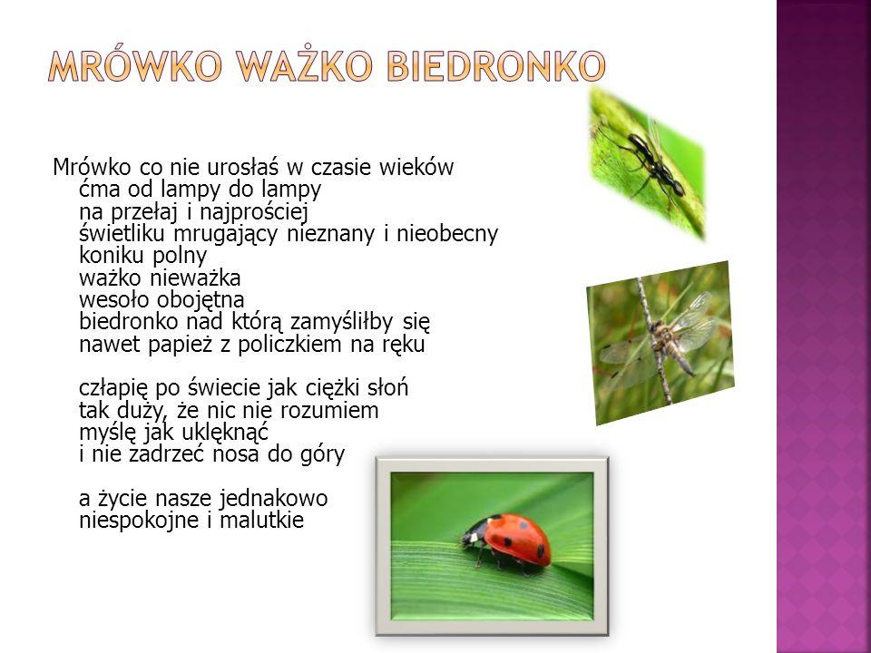 Mrówko ważko biedronko
