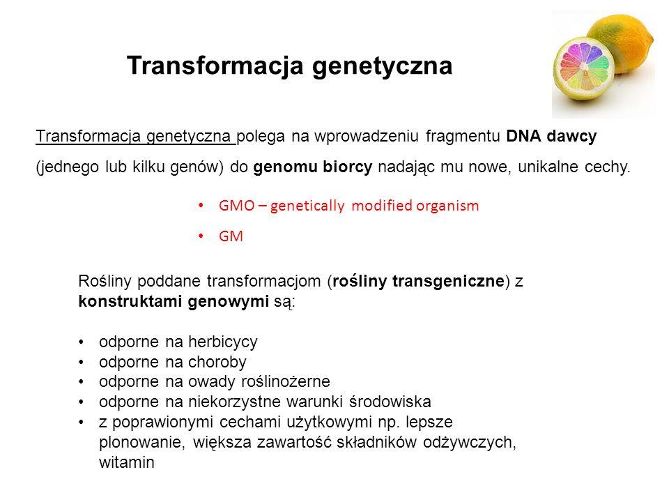 Transformacja genetyczna