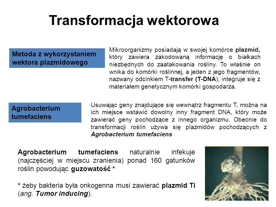 Transformacja wektorowa