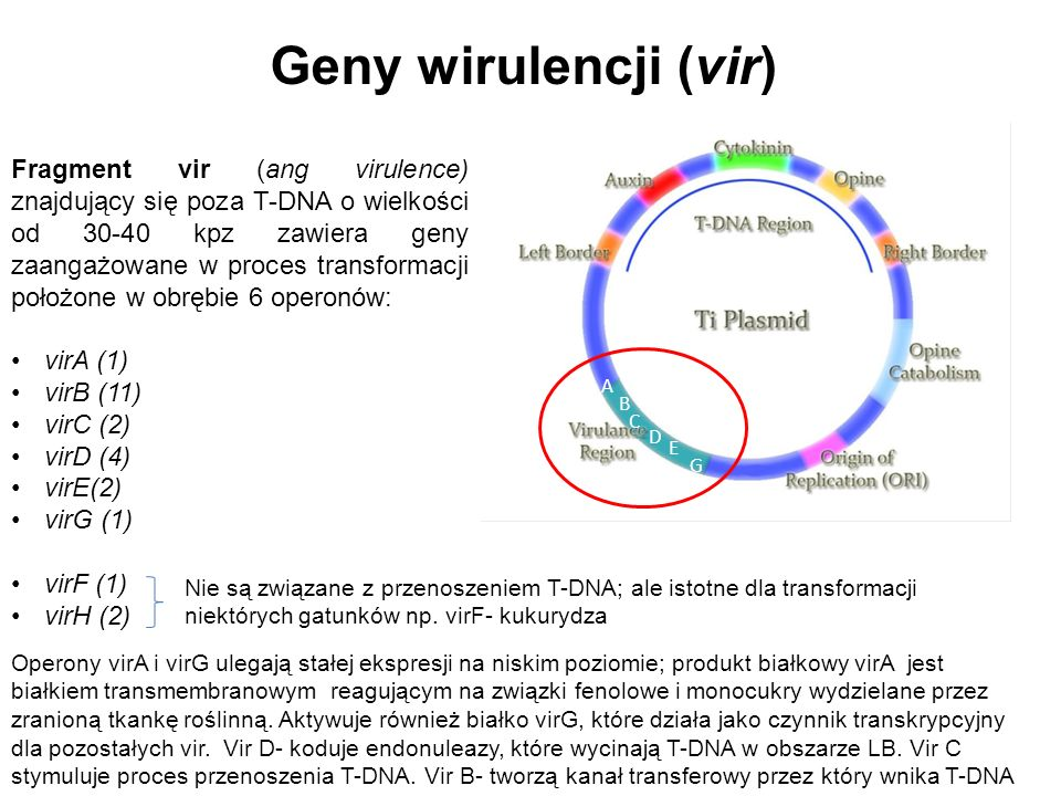 Geny wirulencji (vir)