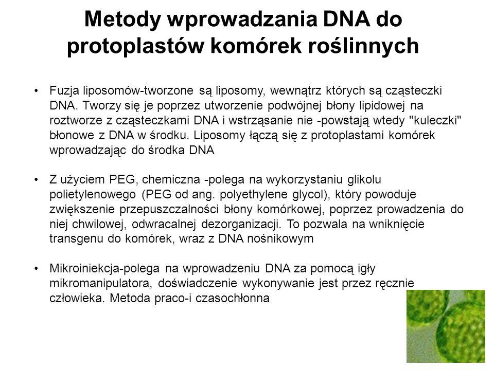 Metody wprowadzania DNA do protoplastów komórek roślinnych