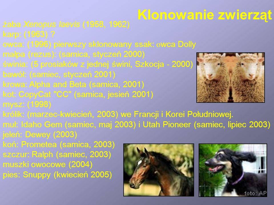 Klonowanie zwierząt żaba Xenopus laevis (1958, 1962) karp: (1963)