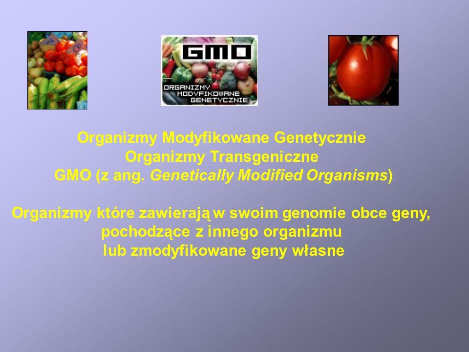 Organizmy Modyfikowane Genetycznie Organizmy Transgeniczne