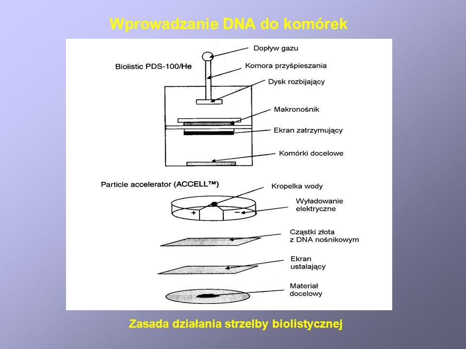 Wprowadzanie DNA do komórek