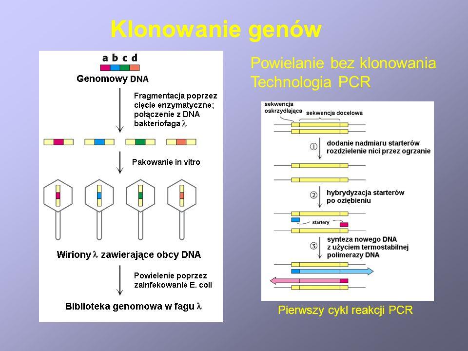 Klonowanie genów Powielanie bez klonowania Technologia PCR