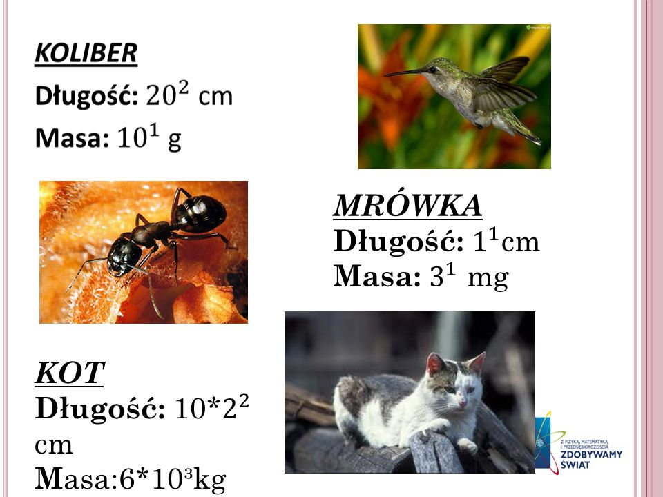 MRÓWKA Długość: 1 1 cm Masa: 3 1 mg KOT Długość: 10* 2 2 cm Masa:6*10³kg