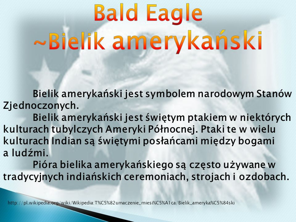 Bald Eagle ~Bielik amerykański