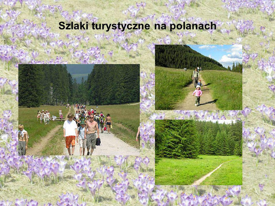 Szlaki turystyczne na polanach