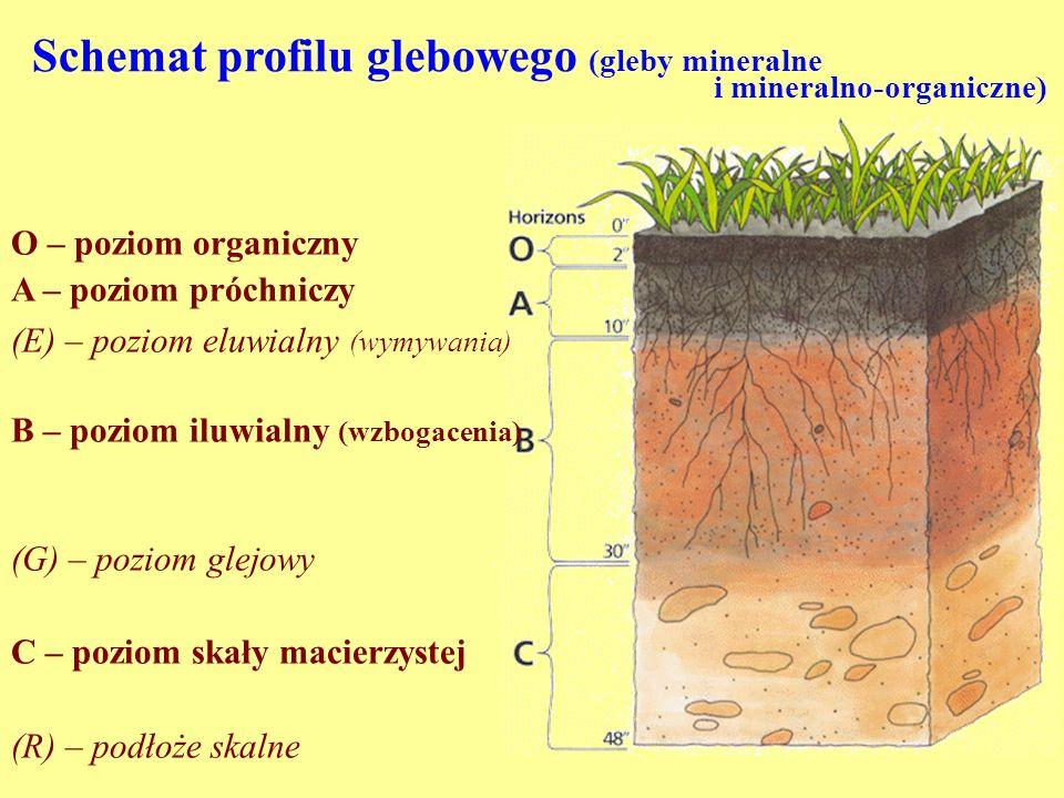 Schemat profilu glebowego (gleby mineralne