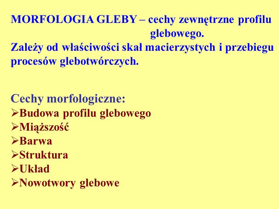 Cechy morfologiczne: MORFOLOGIA GLEBY – cechy zewnętrzne profilu