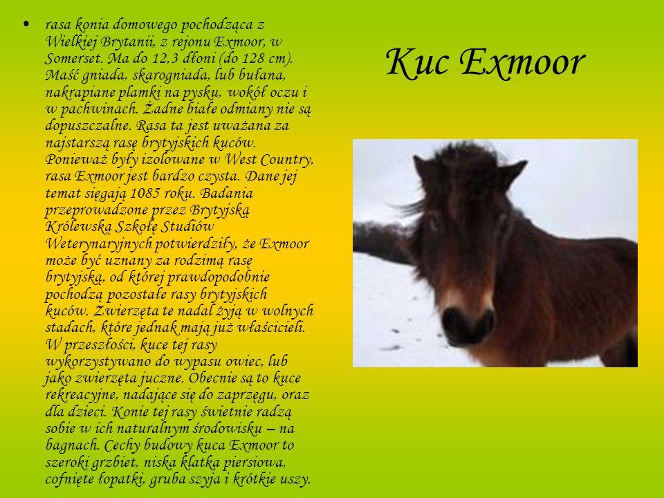 rasa konia domowego pochodząca z Wielkiej Brytanii, z rejonu Exmoor, w Somerset. Ma do 12,3 dłoni (do 128 cm). Maść gniada, skarogniada, lub bułana, nakrapiane plamki na pysku, wokół oczu i w pachwinach. Żadne białe odmiany nie są dopuszczalne. Rasa ta jest uważana za najstarszą rasę brytyjskich kuców. Ponieważ były izolowane w West Country, rasa Exmoor jest bardzo czysta. Dane jej temat sięgają 1085 roku. Badania przeprowadzone przez Brytyjską Królewską Szkołę Studiów Weterynaryjnych potwierdziły, że Exmoor może być uznany za rodzimą rasę brytyjską, od której prawdopodobnie pochodzą pozostałe rasy brytyjskich kuców. Zwierzęta te nadal żyją w wolnych stadach, które jednak mają już właścicieli. W przeszłości, kuce tej rasy wykorzystywano do wypasu owiec, lub jako zwierzęta juczne. Obecnie są to kuce rekreacyjne, nadające się do zaprzęgu, oraz dla dzieci. Konie tej rasy świetnie radzą sobie w ich naturalnym środowisku – na bagnach. Cechy budowy kuca Exmoor to szeroki grzbiet, niska klatka piersiowa, cofnięte łopatki, gruba szyja i krótkie uszy.