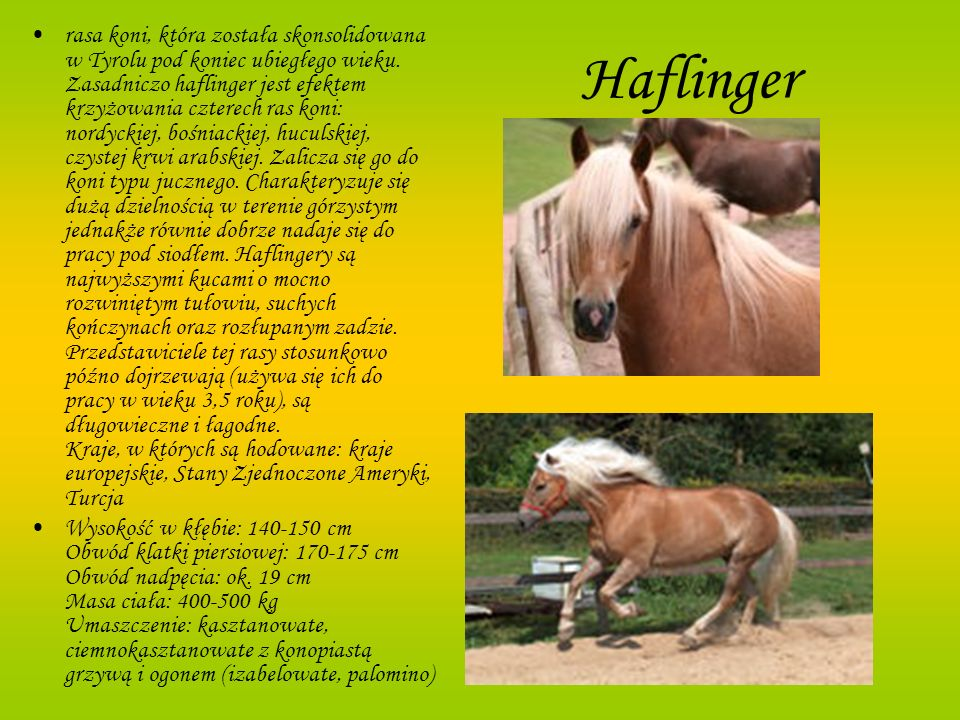 rasa koni, która została skonsolidowana w Tyrolu pod koniec ubiegłego wieku. Zasadniczo haflinger jest efektem krzyżowania czterech ras koni: nordyckiej, bośniackiej, huculskiej, czystej krwi arabskiej. Zalicza się go do koni typu jucznego. Charakteryzuje się dużą dzielnością w terenie górzystym jednakże równie dobrze nadaje się do pracy pod siodłem. Haflingery są najwyższymi kucami o mocno rozwiniętym tułowiu, suchych kończynach oraz rozłupanym zadzie. Przedstawiciele tej rasy stosunkowo późno dojrzewają (używa się ich do pracy w wieku 3,5 roku), są długowieczne i łagodne. Kraje, w których są hodowane: kraje europejskie, Stany Zjednoczone Ameryki, Turcja