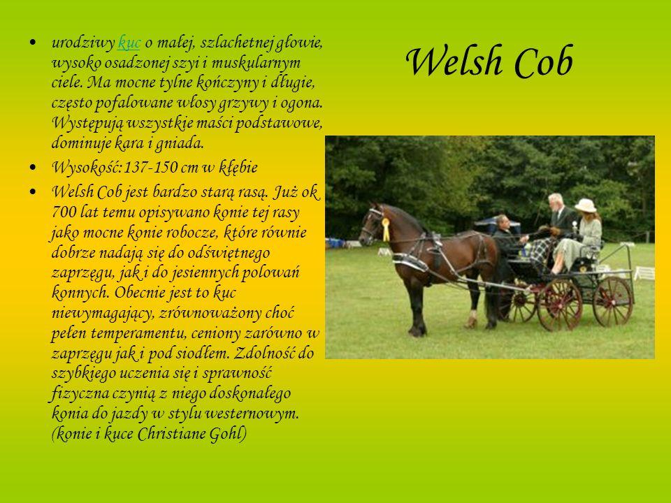 Welsh Cob