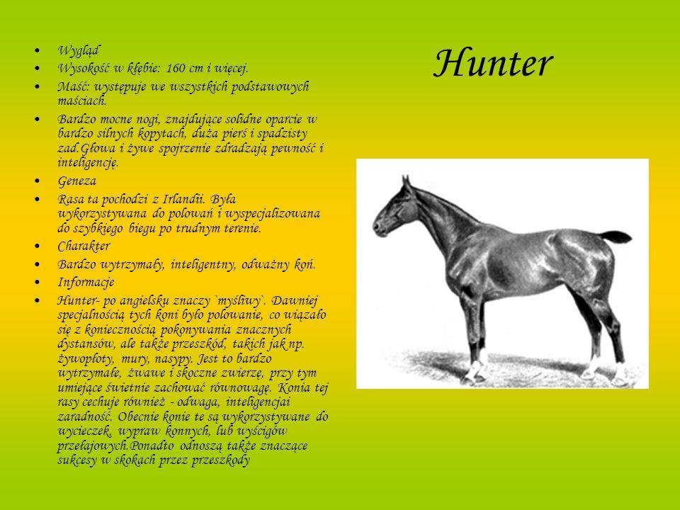 Hunter Wygląd Wysokość w kłębie: 160 cm i więcej.